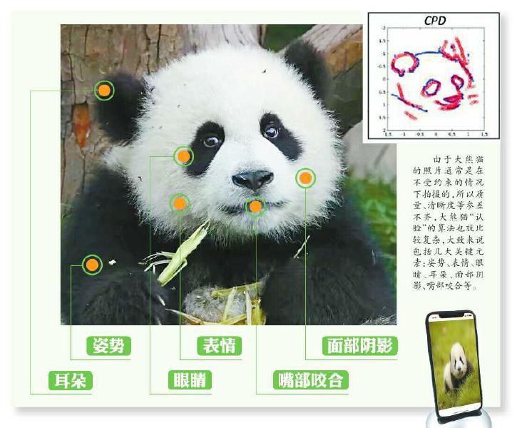 แอพจะใช้องค์ประกอบต่าง ๆ เพื่อระบุหมีแพนด้ารวมถึงรูปร่างของหูและสัญลักษณ์ของตา