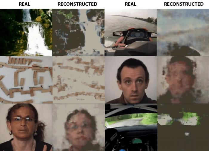 แต่ละคู่นำเสนอเฟรมจากวิดีโอที่ดูโดยผู้ทดสอบและภาพที่สร้างขึ้นโดยเครือข่ายประสาทเทียม เครดิต: Grigory Rashkov / Neurobotics