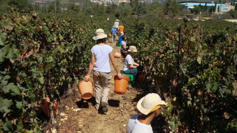 Kibbutz จะเป็นชุมชนที่สมาชิกทุกคนจะร่วมกันประกอบอาชีพเกษตรกรรมและรวมตัวกันในรูปสหกรณ์ (CR:israel21c.org)